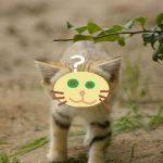 スナネコが可愛い過ぎる!ペットになる?動物園で会える?日本にいる?