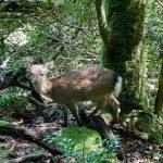 鹿肉は栄養抜群!寄生虫対策はたった2つのポイントでOK!